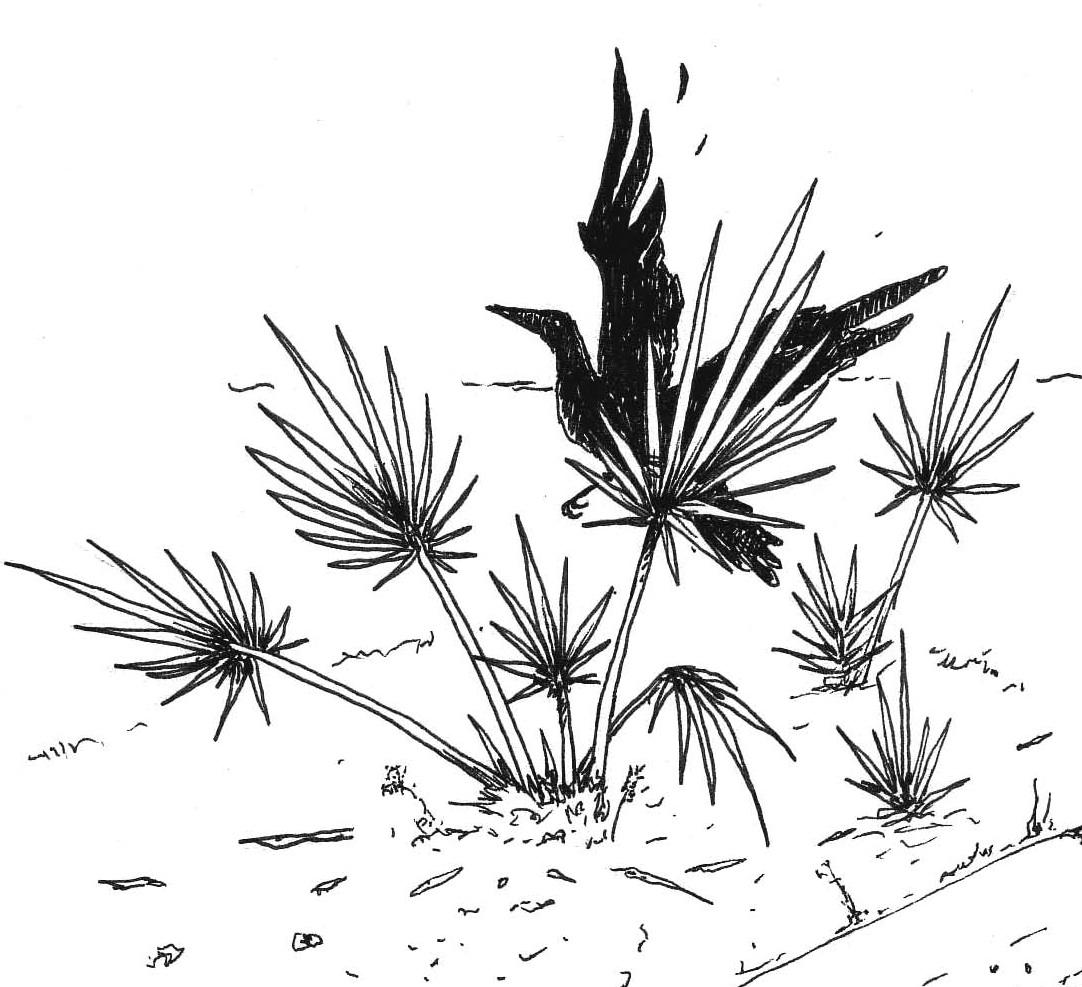 A blackbird was thrashing